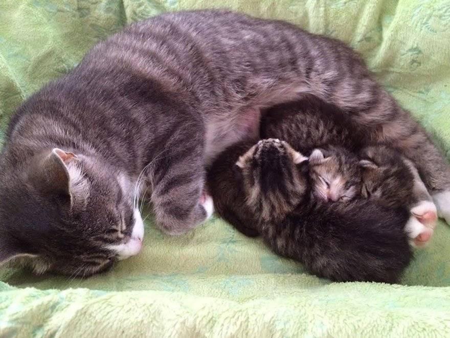 Как спасти потомство или почему кошка бросила котят