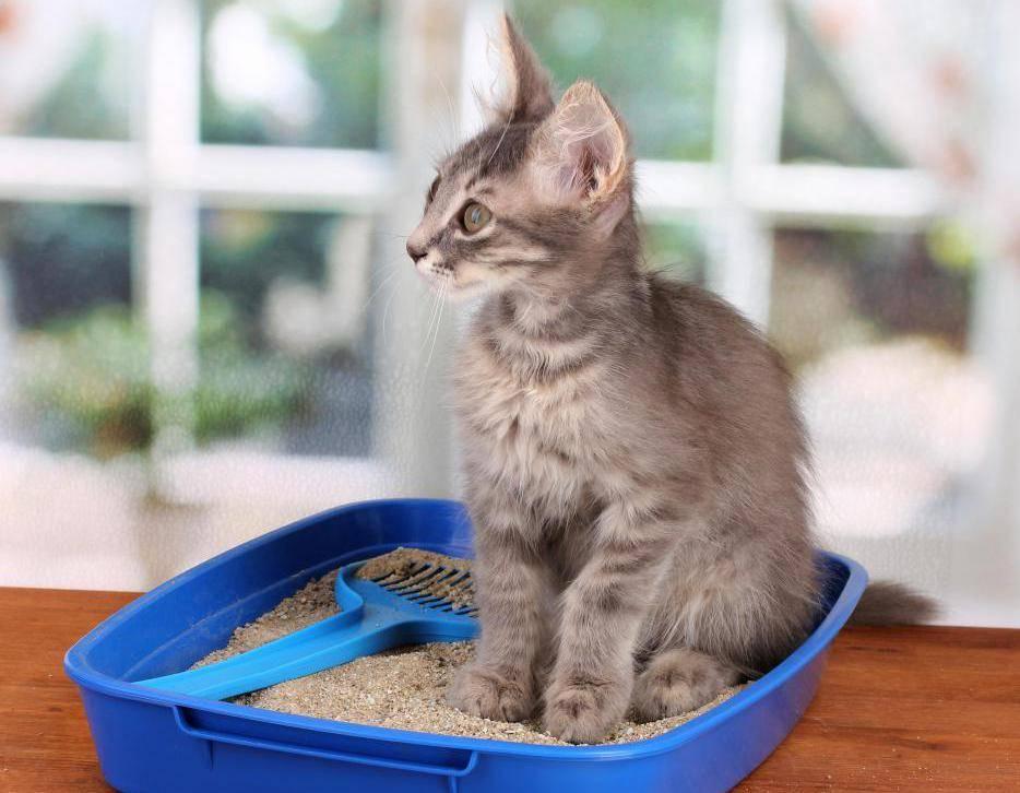 Почему кошка ссыт по углам