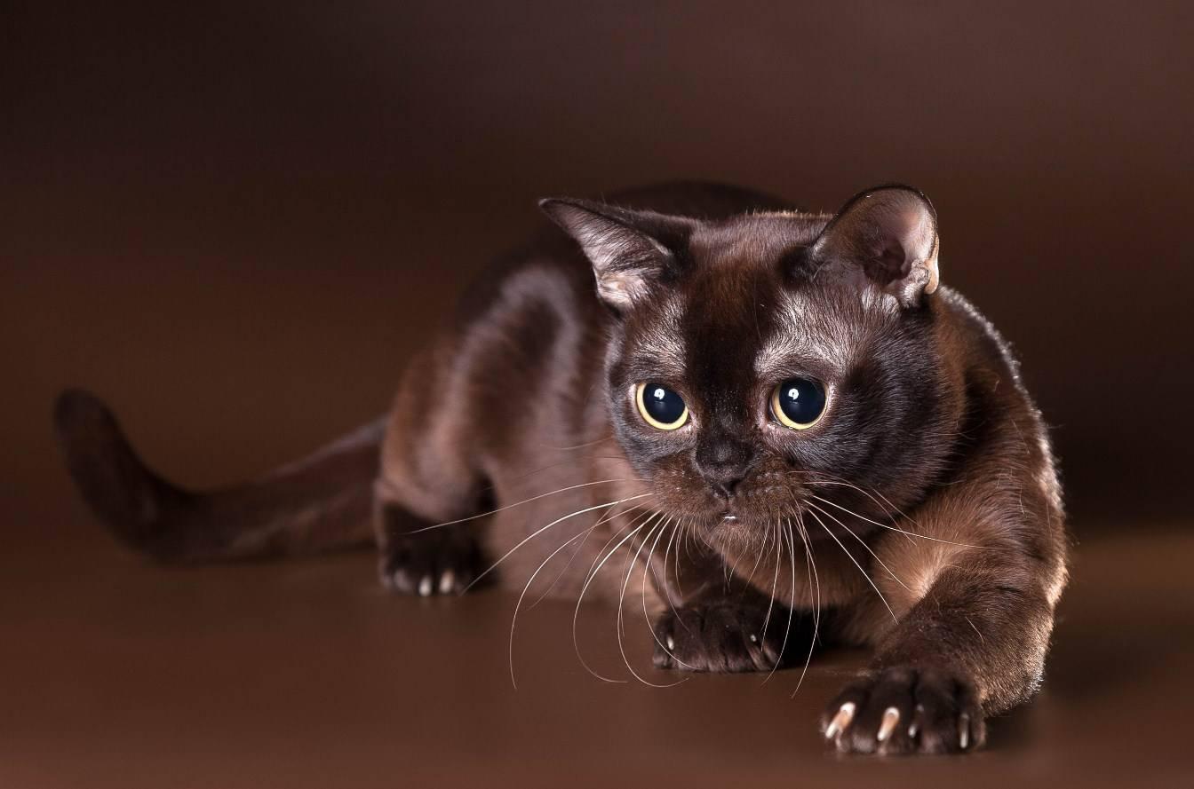 Кошачьи клички как выбрать имя домашнему питомцу