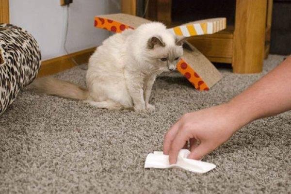 Народные способы и специализированные средства которые помогут избавиться от запаха кошачьей мочи