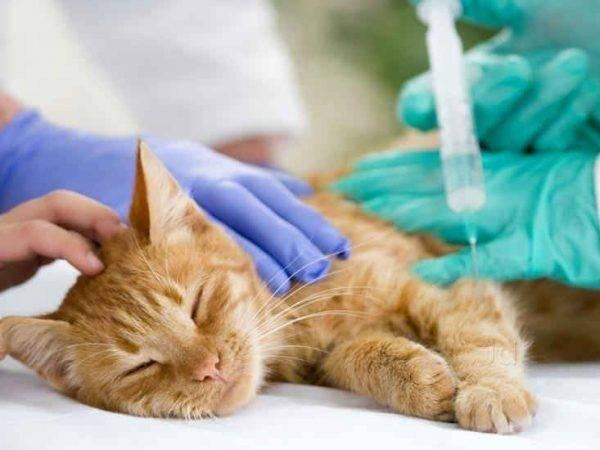 Успокоительное для кошки и кота: средства и отзывы о них