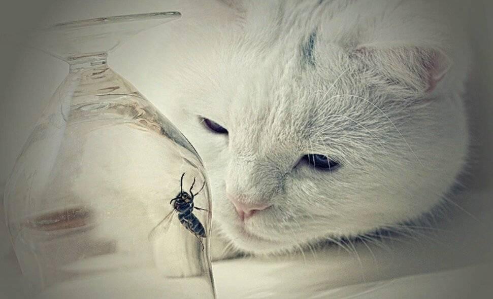 Что делать если кота укусила оса