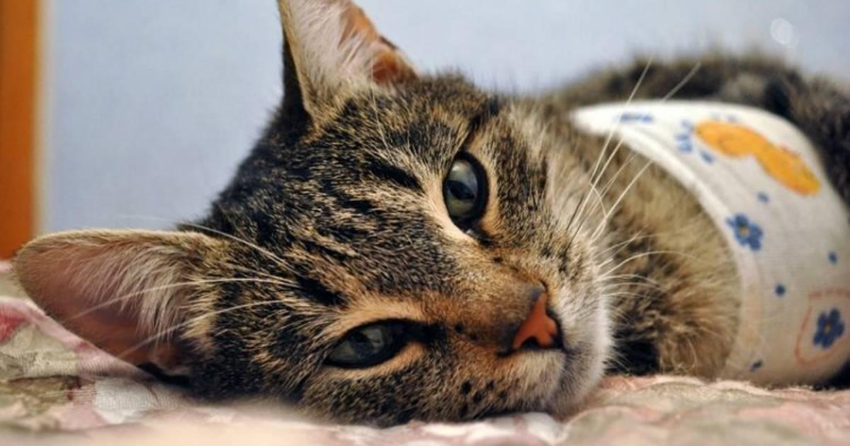 Сколько времени кошка отходит наркоза после стерилизации