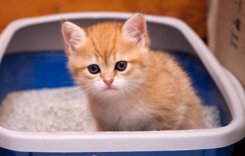 Касторовое масло для кошек при запоре важные нюансы