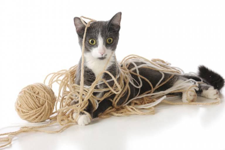 Что делать если у кошки кишечная непроходимость