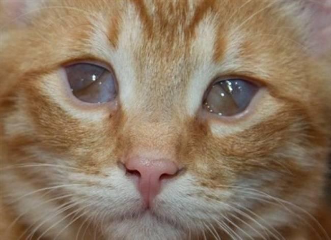 Чем закапать глаза котенку