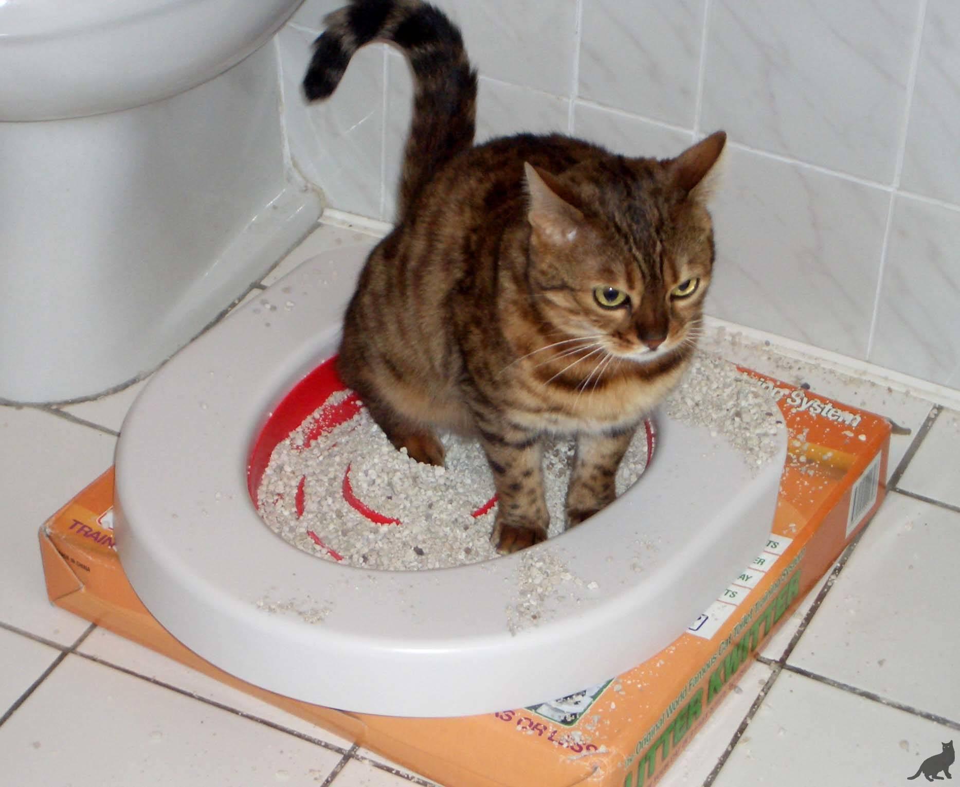 Почему кошки какают с кровяными выделениями: причины и как помочь питомцу