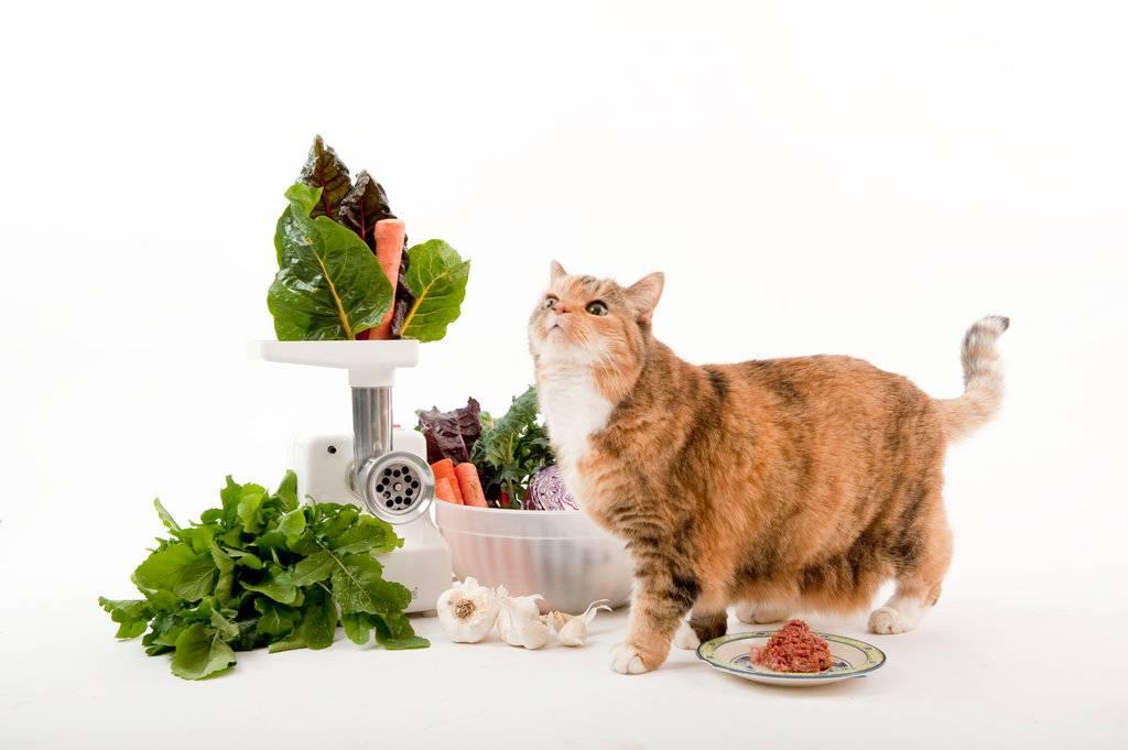 Чем кормить кота все о правильном питании
