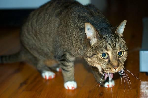 Кот рвется желтой жидкостью москва