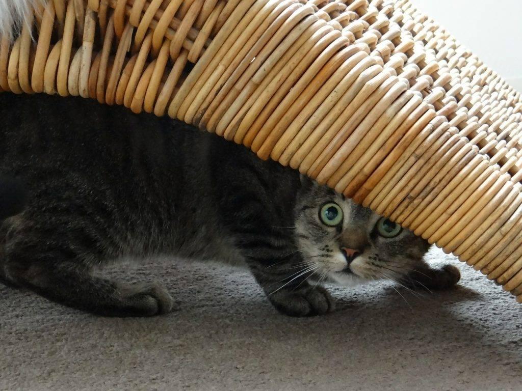 Кошка не ест и не пьет: причины отказа от еды и первая помощь