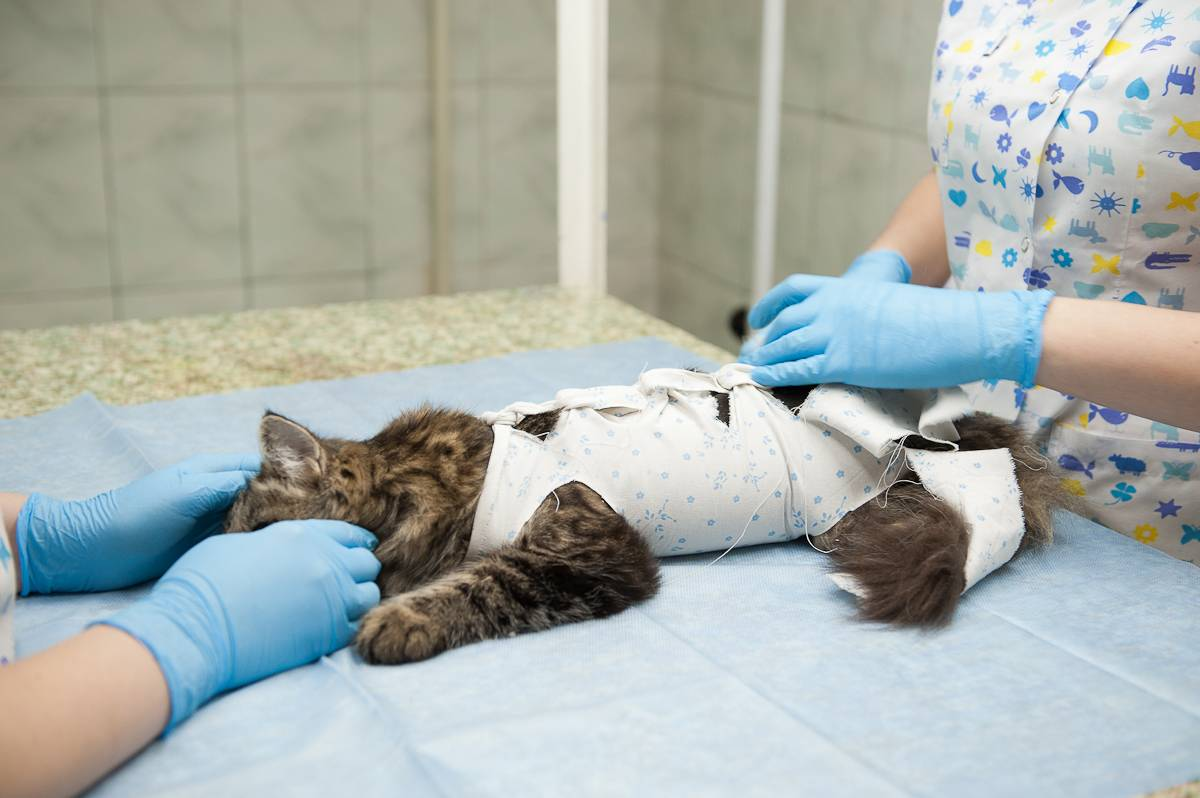 Попонка послеоперационная для кошки