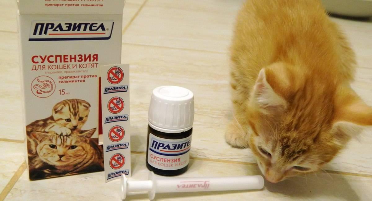 Как правильно давать взрослой кошке и котенку суспензию против глистов