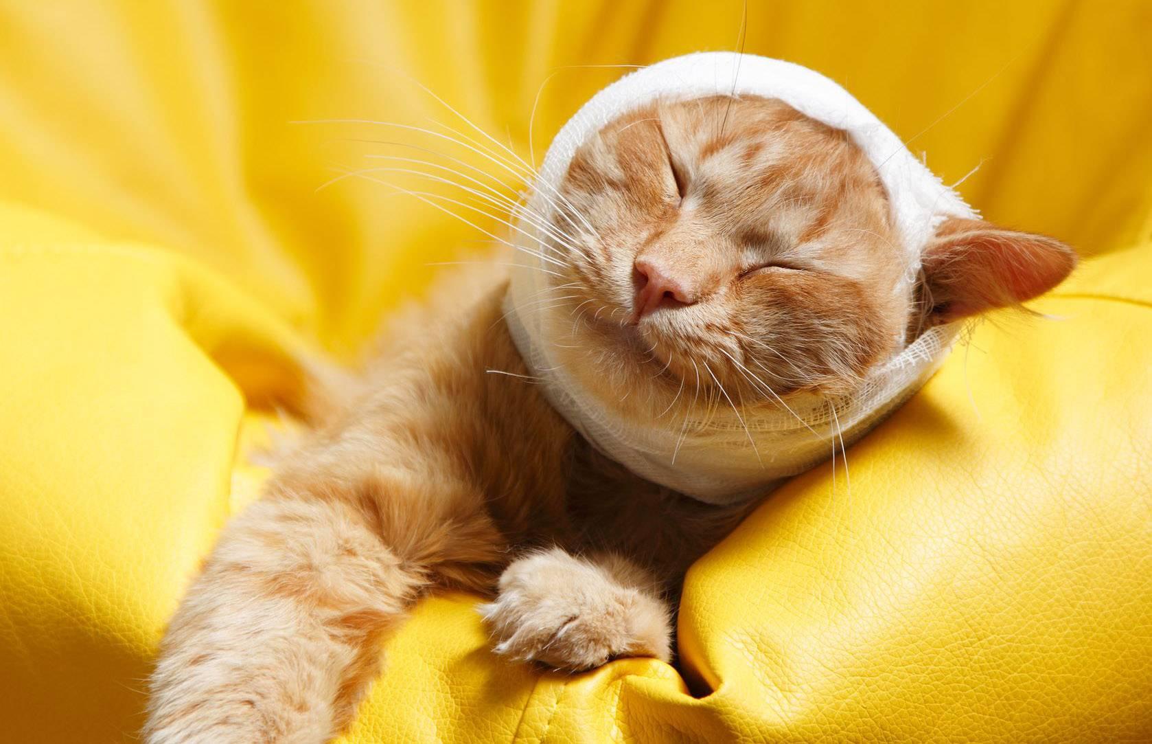 Лечение шишок на животе и на шее под кожей у кошки