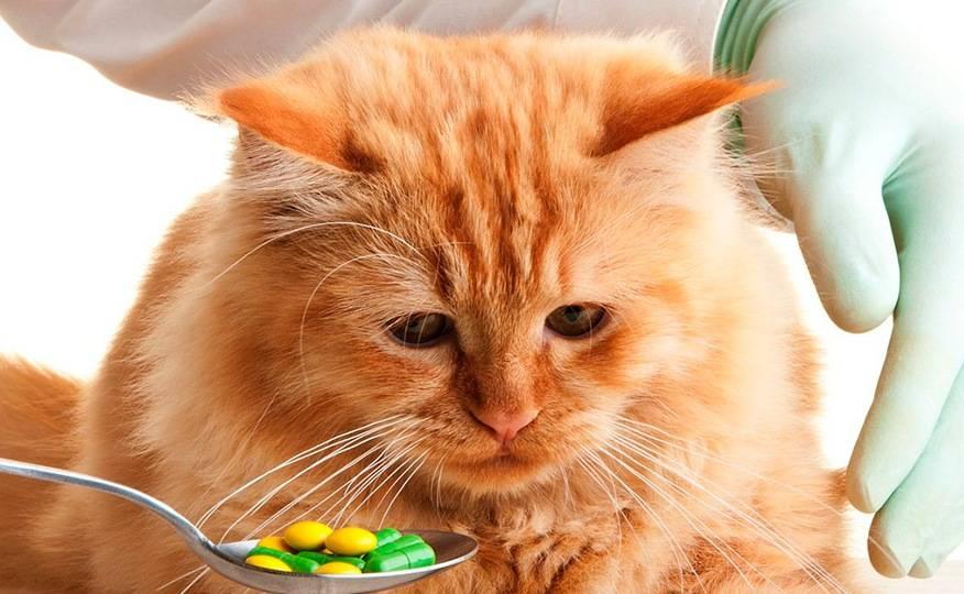 Какие антибиотики можно давать коту