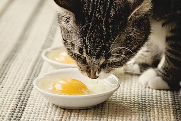 Молочно-овощная диета для кошек