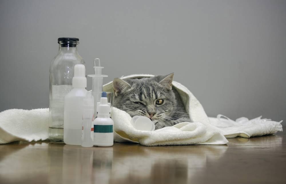 Почему у кошки пахнет изо рта гнилью: причины и что нужно делать