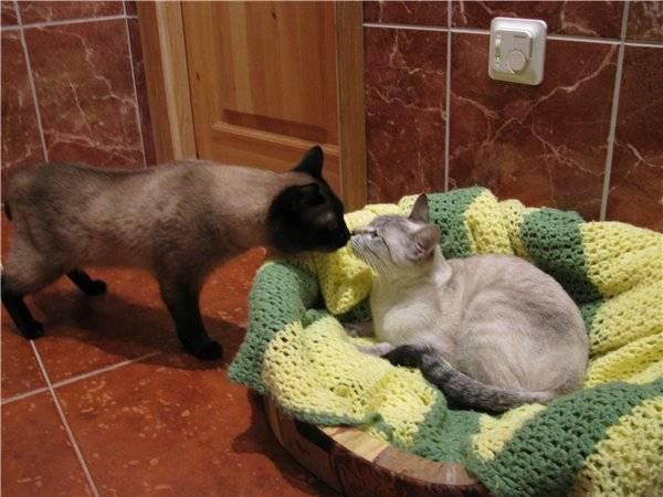 Варианты спаривания котов и кошек: как происходит, на какой день можно вязать