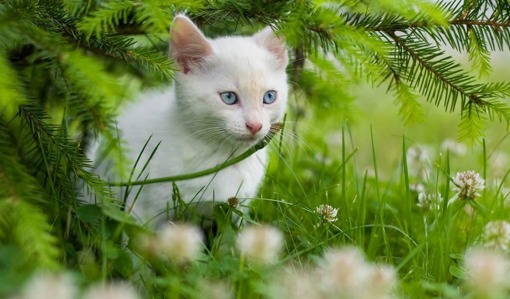 Как можно назвать котенка девочку, мальчика, клички котят по окрасу