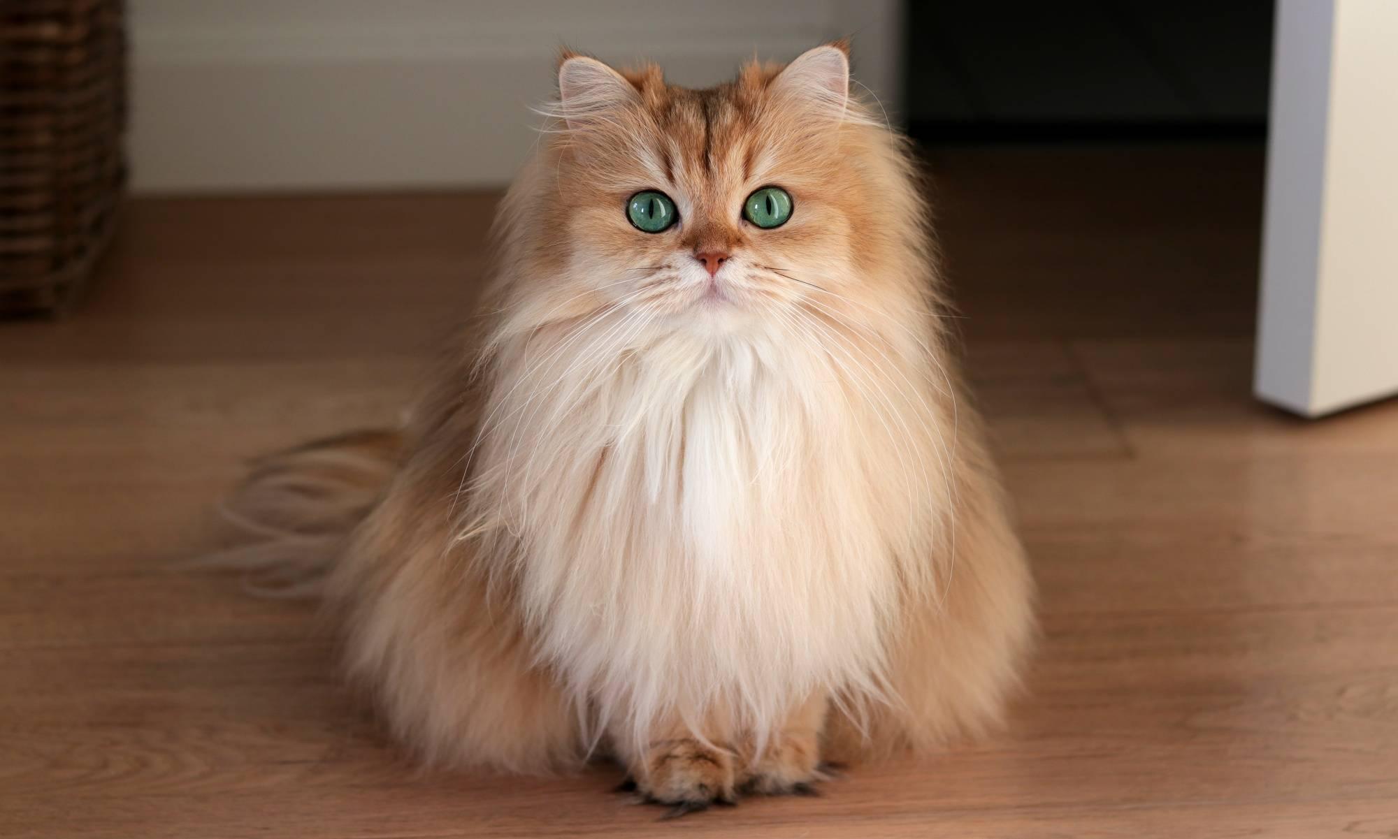Кишечная непроходимость у кошек лечение в домашних условиях