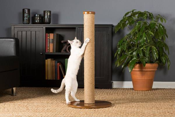 Почему кошки лижут людей описываем все известные причины