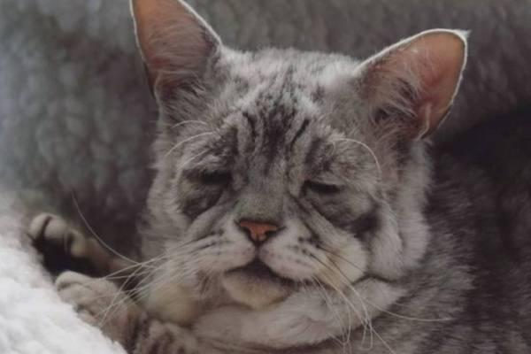 Почему кошка гадит на кровать и что делать?