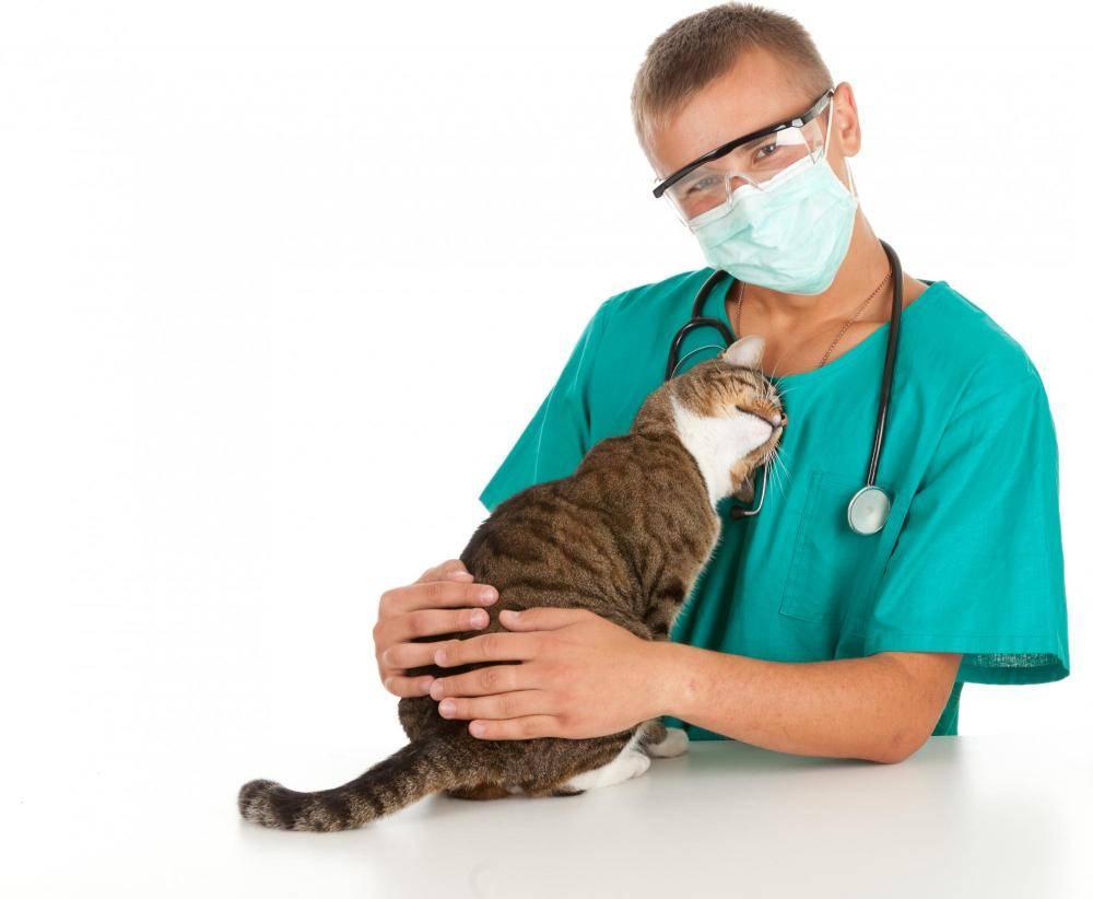 Онкологические заболевания у кошек: причины, профилактика, лечение