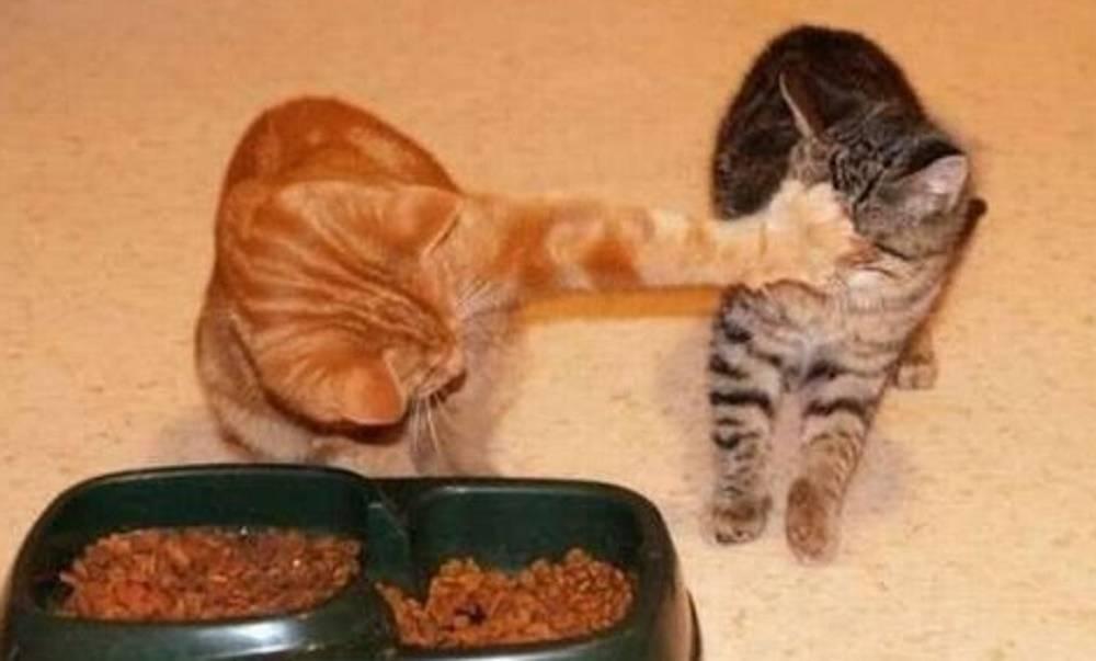 Кошка кашляет и хрипит: основные причины кашля, хрипов и тяжёлого дыхания кота