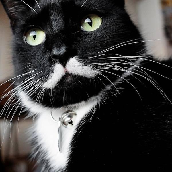 Для чего коту нужны усы