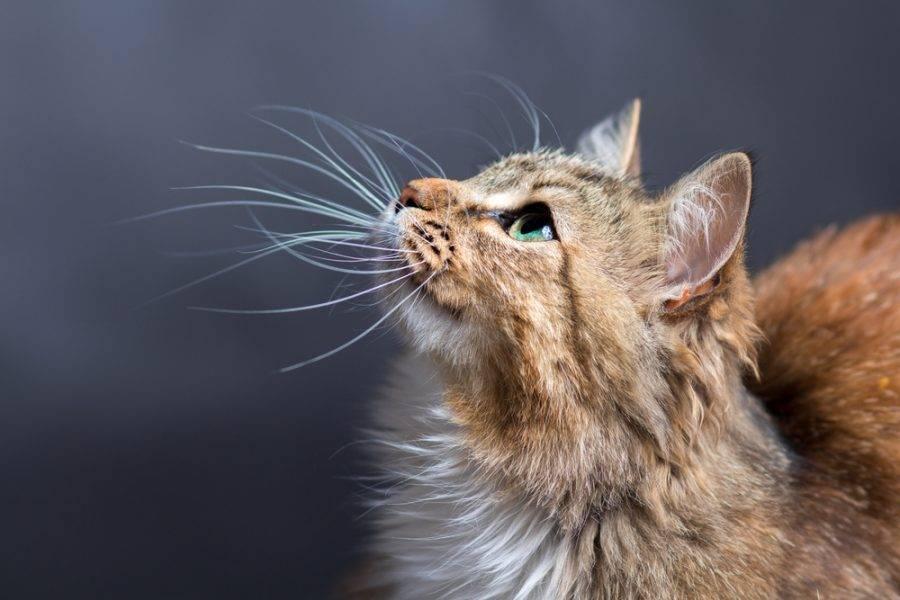 солнышко картинки усики котика время человек выглядит