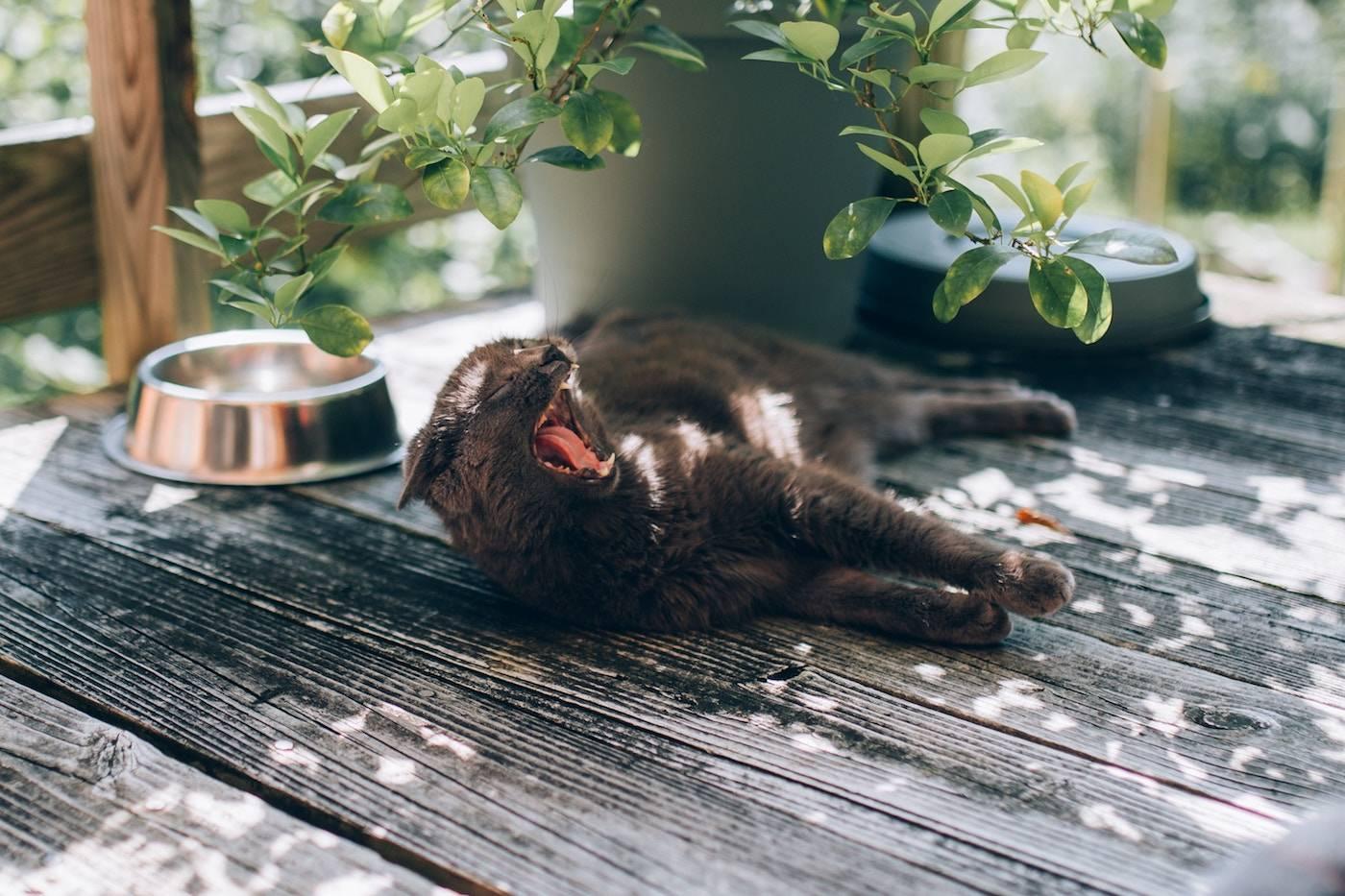 Панкреатит у кошек лекарства