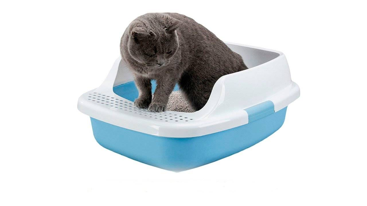 Что делать если у кота понос с кровью Поможет ли дицинон