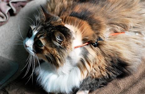 Лечим панкреатит у кошки в домашних условиях симптомы препараты и корм при панкреатите