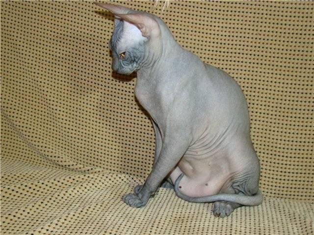своим завистникам что весит у кошки на животе фото понадобится взять около