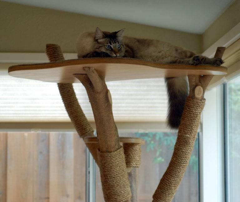 Правила изготовления когтеточки для кошки своими руками