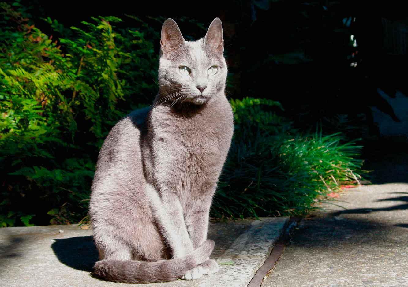 Как понять, что кот - крысолов?