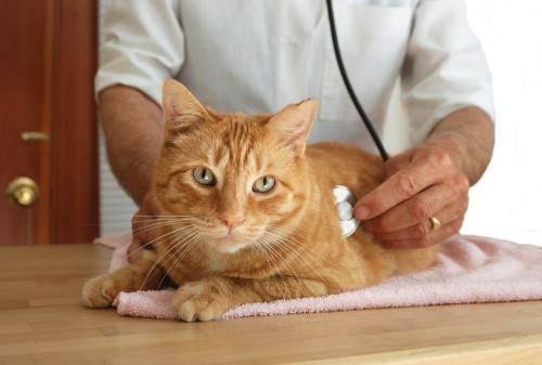 Панкреатит у собак – статья о лечении животных ИВЦ