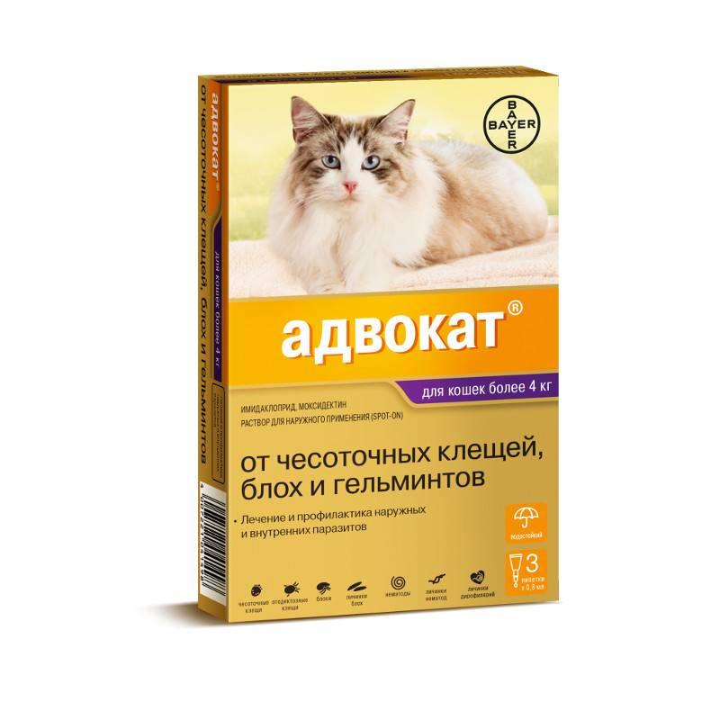 Что лучше от глистов для кошек