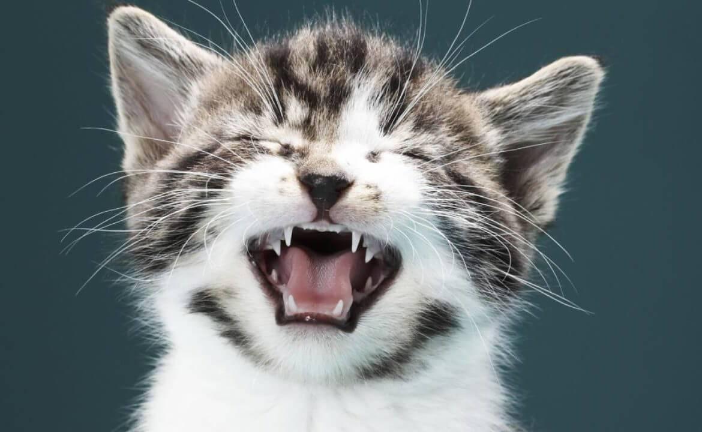 Почему кошка может чихать