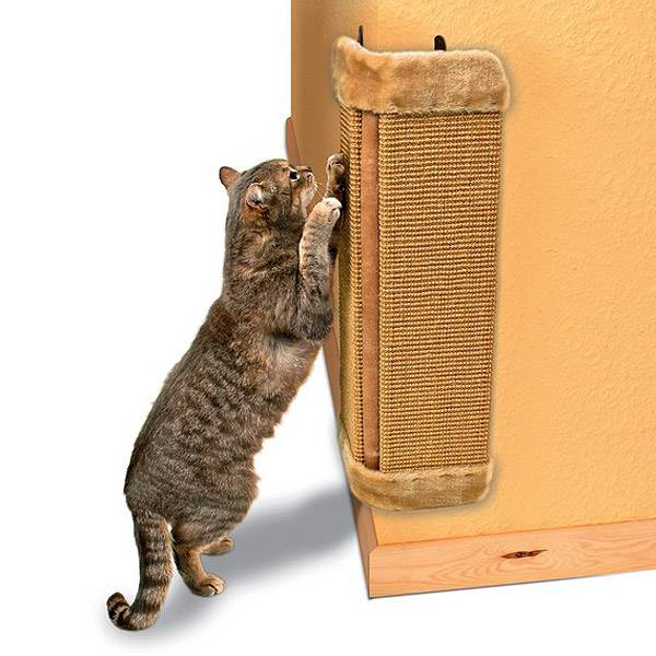 Как приучить кота к когтедралке