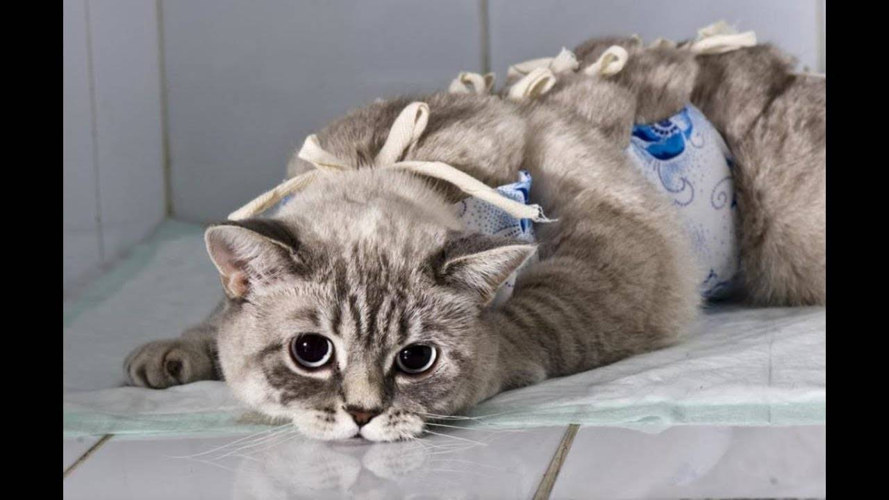 Котенок не ходит в туалет по-большому