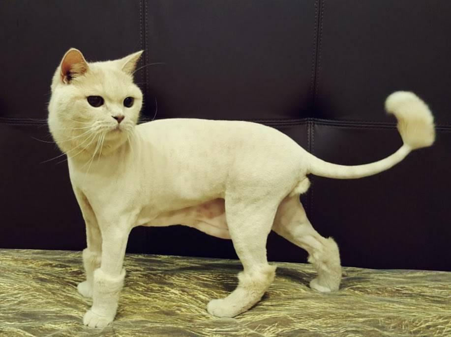 Можно ли подстричь кошку обычной машинкой