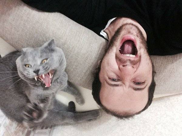 Почему кошка кусает своих маленьких котят?