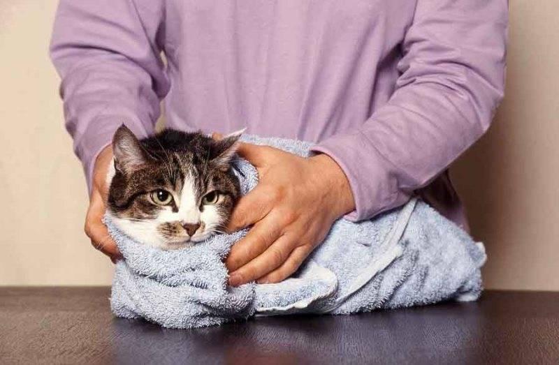 Микролакс при запоре у кошек: показания к применению