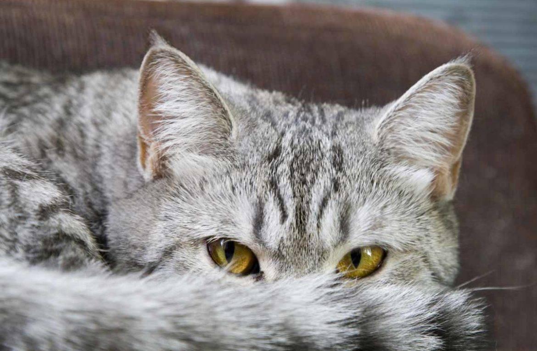 Заболевания кошек кровь из носа