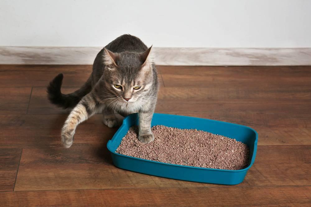 Расскажем про способы отучить кошку гадить в неположенном месте и это проверенные методы