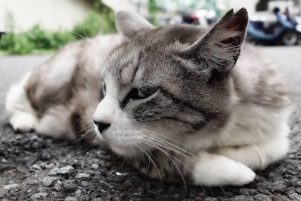 Слезятся глаза и заложен нос у кошки thumbnail