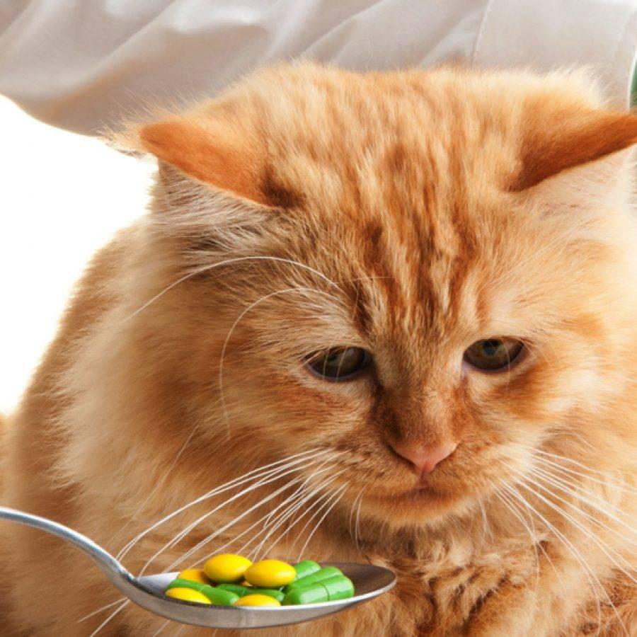 Что делать хозяину, если он заметил кровь под хвостом у своей кошки?