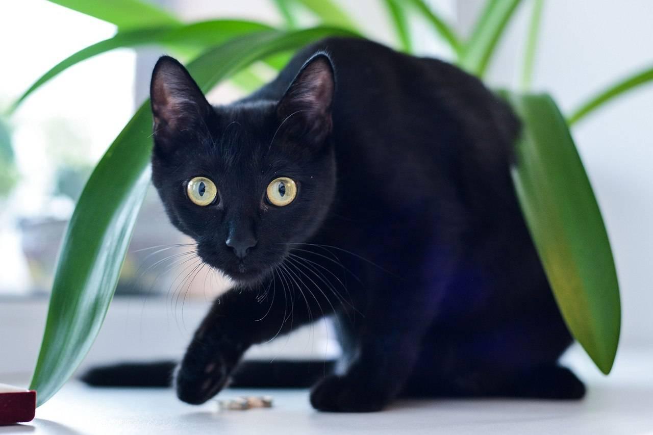 черная кошка в доме фото поле это