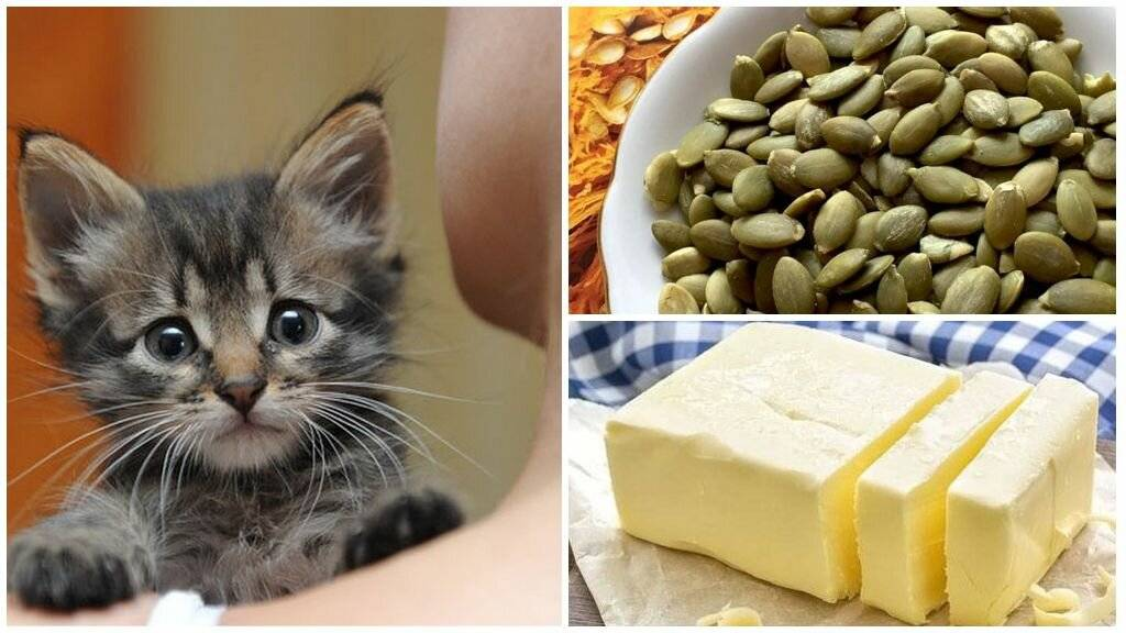 Как обработать кошку от глистов - полезные советы и лайфхаки