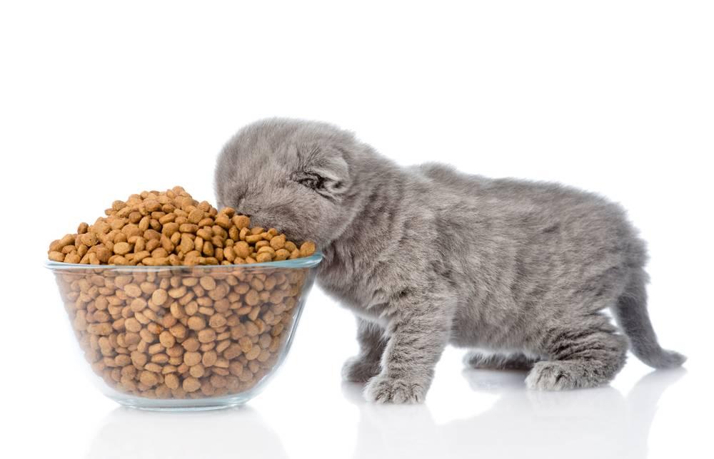 Как правильно кормить кошку влажным кормом: основные советы